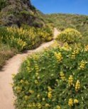 winding-trail-through-the-lupine-covered-hills-255678
